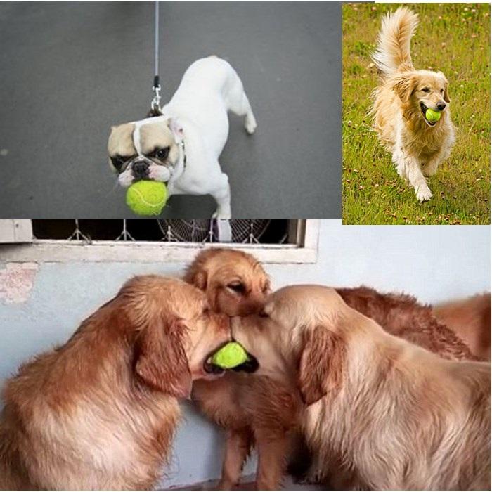 [해외]4 개 애완 동물 강아지 강아지 고양이 장난감 볼 놀이 볼 테니스 볼 저렴한/4 pieces pet dog puppy cat toy ball play ball tennis ball cheap